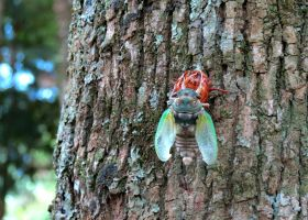 Cicada coming out of his shell by danielajaclyn
