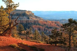 Stock: Bryce Canyon morning by Celem