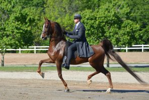 Horse Show 5-2-15 by Tailgun2009