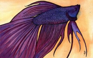 Betta by puffbird