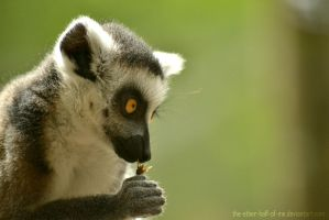 Lemur by The-Other-Half-Of-Me