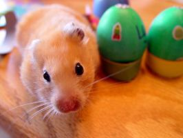 Hamsters are eggcellent by shutterbabe2006