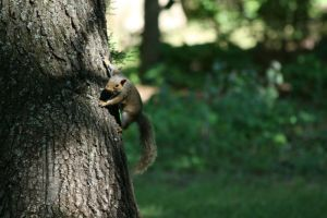 Ninja Squirrel by Silver-Dew-Drop