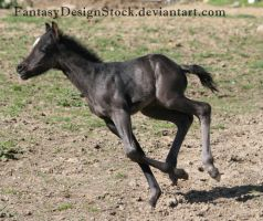 Foal-Carl 23 by FantasyDesignStock
