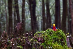Lego in Fangorn Forest by nnPhoto