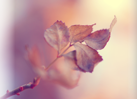 winter leaves by 00SpaceOddity00