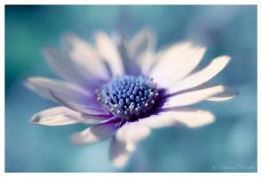 Flower in Blue by Yeoman2b