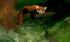 Red Panda by TheRisingSoul