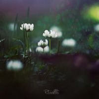 Dark white by Piroshki-Photography