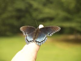 Butterfly-last one for now by Irie-Stock