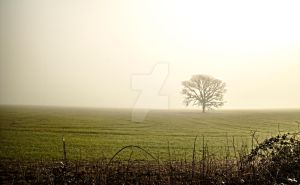 Country Field by Walden-Photography