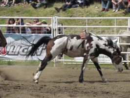 Rodeo Horse Stock 7 by horsecrazycool