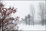 February in Ontario by IgorLaptev