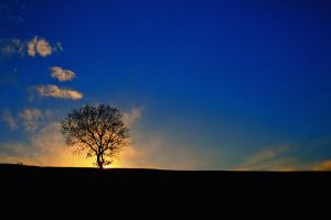 Lonely tree by NickKoutoulas