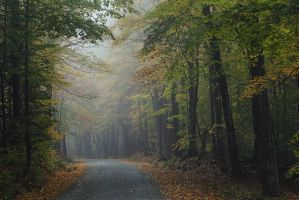 The Road by BlackRoomPhoto