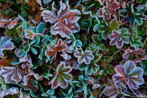 Frosty Ground - 01 by AndreasResch