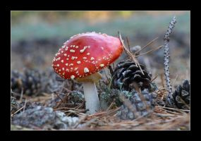 fly agaric 4 by 21711