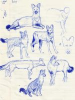 Dhole Studies by MommaCabbit