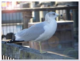 Sally the Seagull by AllyCat1994
