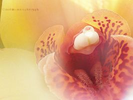 Orchid II by pepytta