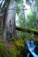 old growth by nialater