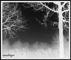 Ghost in the trees... by ansdesign