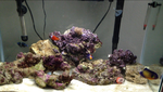 20 Gallon Saltwater Aquarium by Mr-kit