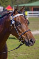 STOCK - Canungra Show 2012 015 by fillyrox