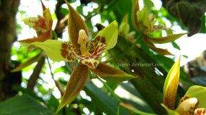 orchid. green by Tegori
