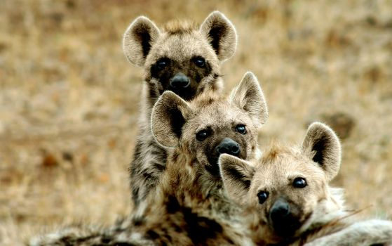 Hyena Clan by LifeSlowlyDies