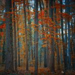 we'll be together by ildiko-neer