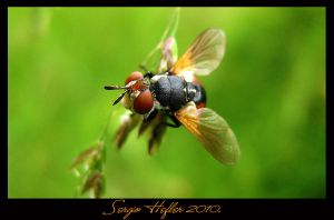 fly32 by cartell1985
