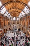 Natural History Museum by lesogard