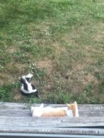 Cat and Skunk by RecklessWizard231