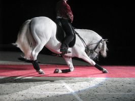Stock - Andalusian 4 by EleganceApparent