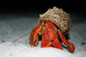 CRAB by ewensimpson