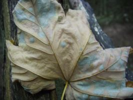 leaf lurgy by fierysoul