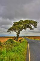 Solitary Tree by ennes