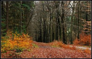 In the late autumnal forest by jchanders