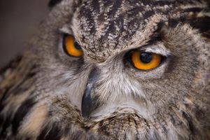 Eagle Owl by ForgedSteel