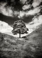 Sycamore Gap 3 mono by newcastlemale