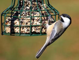 Lil' Chickadee by boogster11