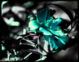 The Hope Flower..... by Tigles1Artistry