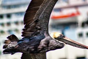 Brown Pelican and Cruise Ship by TomFawls