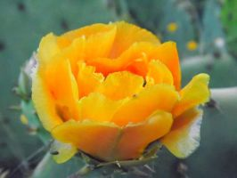 Yellow Rose Of Texas by TheGerm84