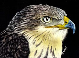 Hawk Eye by shonechacko