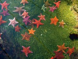 Starfish by baby-drummer23