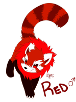 + Red the Red Panda+ by Nayobe