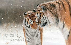 Winter's Embrace by Nathan-Bye