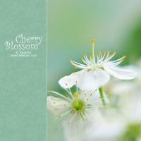 Cherry Blossom -III by AlexEdg